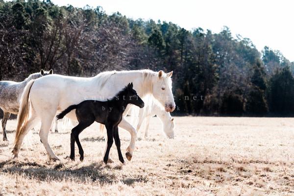 Keepin Up  Photography Art | Equestrian Art
