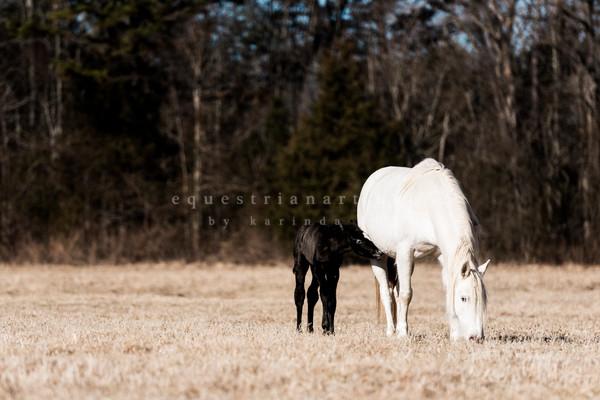 Mom & Baby  Photography Art | Equestrian Art