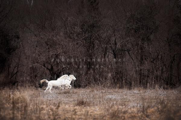 A Leap Of Faith  Photography Art | Equestrian Art