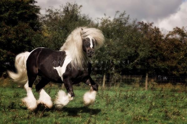 Gypsy Dancer  Photography Art | Equestrian Art