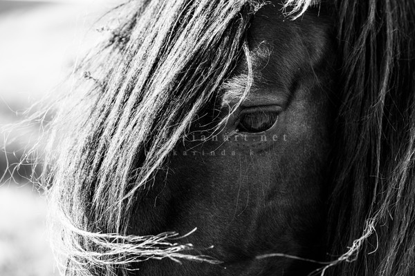 Fel Ling In Love With The Details (1 Of 5) Photography Art | Equestrian Art