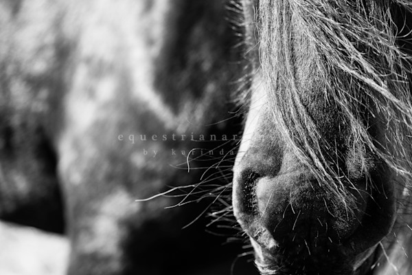 Fel Ling In Love With The Details (2 Of 5) Photography Art | Equestrian Art