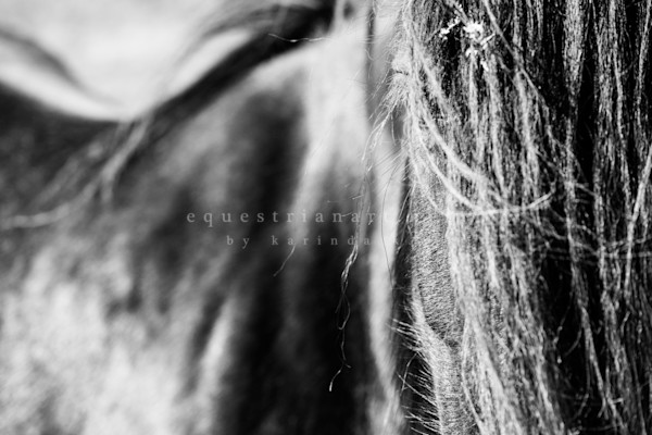 Fel Ling In Love With The Details (3 Of 5) Photography Art | Equestrian Art
