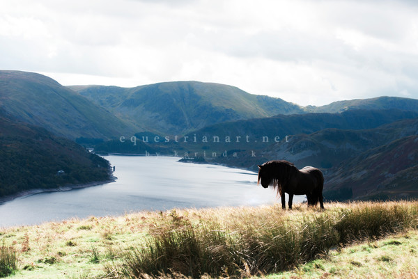 Fell Ponies Fine Art Prints | Lakes District England