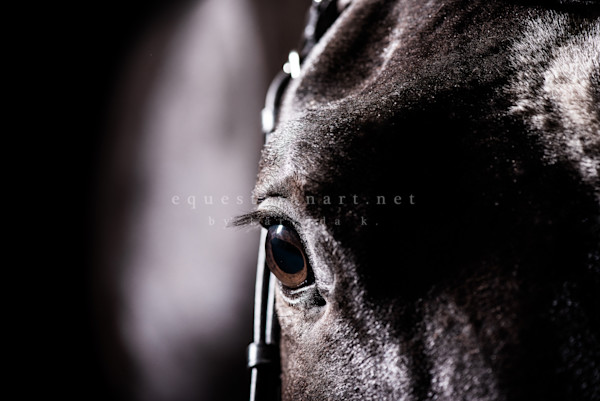The Story Photography Art | Equestrian Art