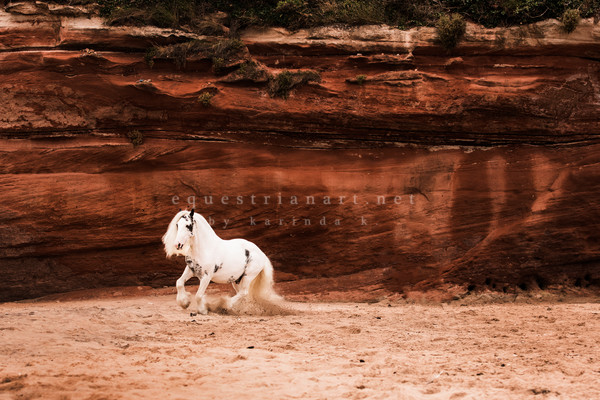 Gypsy Horses Fine Art Prints