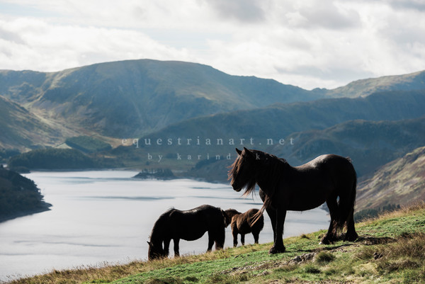 Protecting The Herd  Photography Art | Equestrian Art