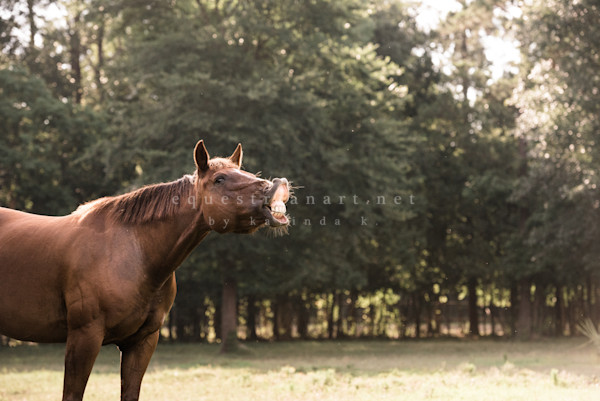 Grinning Rumba Photography Art | Equestrian Art