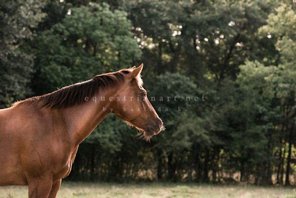 Rumba In The Wind  Photography Art | Equestrian Art
