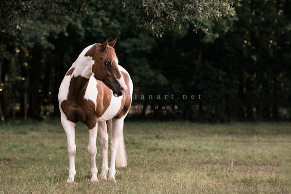 Spotted Scooby  Photography Art | Equestrian Art