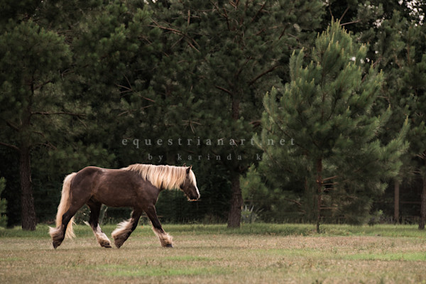 Troubador The Dancing Gypsy  Photography Art | Equestrian Art