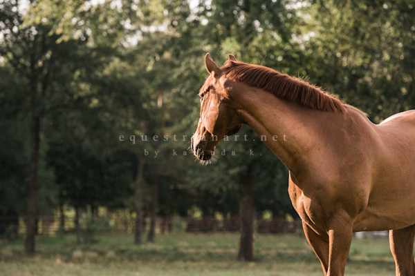 Whiskey Glow Photography Art | Equestrian Art