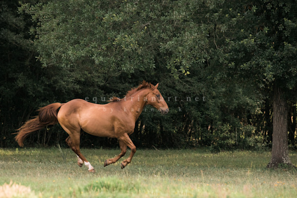 Running With Whiskey Photography Art | Equestrian Art