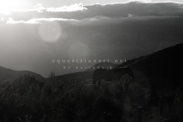 Beam Of Light Photography Art | Equestrian Art