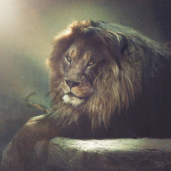 """Lion Of Judah"" Fine Art Photography by Summer Anthony 