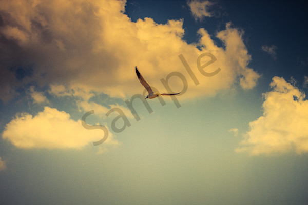 """Soar"" by Harold Vincent 