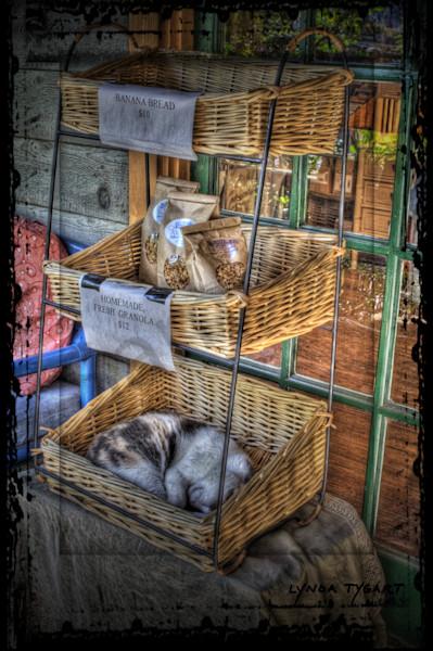 Lynda Tygart Cat in Blue Heaven Cafe Restaurant in Key West Florida– Fine Art Photographs Prints on Canvas, Paper, Metal & More.