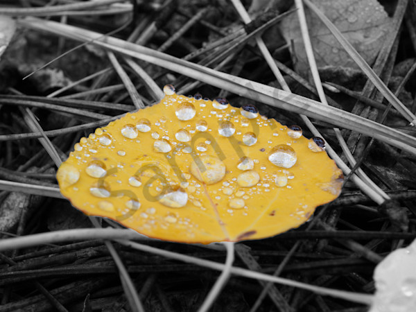 Fallen | Photography | Macro Photography | Outdoors | Nature | Dewey | Dewey Mann | Dewey Mann Art