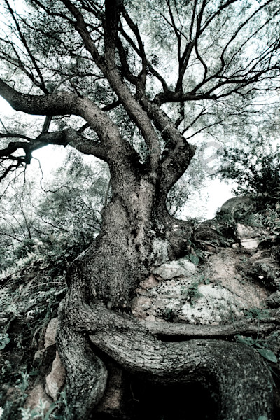 """Strong Roots"" Fine Art Photography by Karen Edmondson 