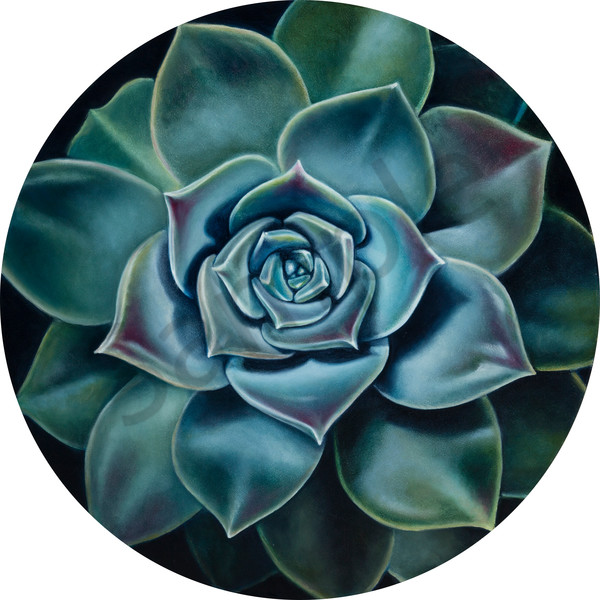 """Bloom in the Desert I"" by South Africa Artist Ilse Kleyn | Prophetics Gallery"