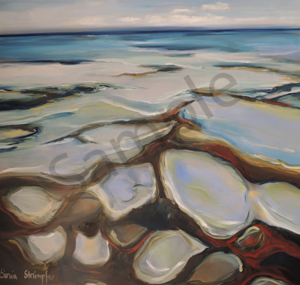 """""""Abalone"""" by Sonia Strumpfer 