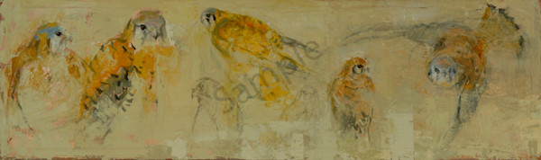 From A Kestrel Journal Art | Mary Roberson