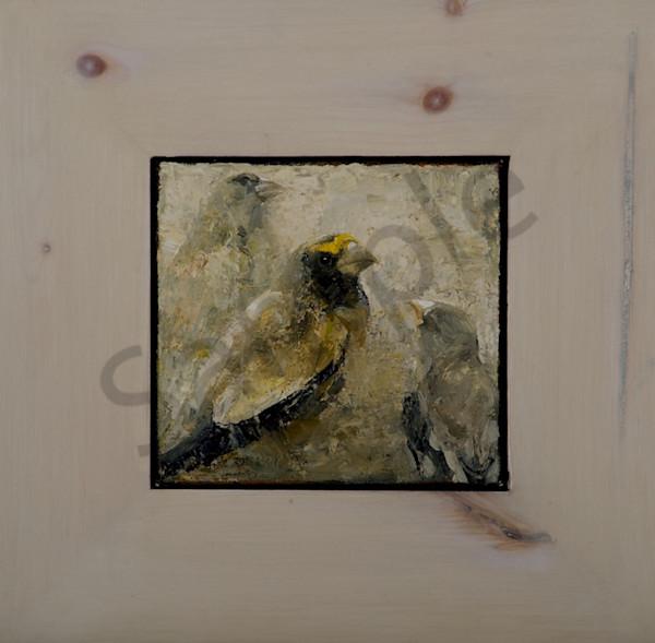 Grosbeaks Art   Mary Roberson