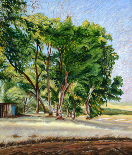 """""""Morning Dance Of Light"""" Art   Bonnie Sailer Fine Art"""