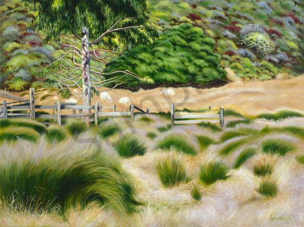 """Palo Colorado Road Sheep, Carmel"" Art   Bonnie Sailer Fine Art"