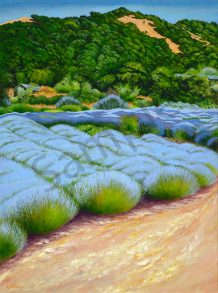 """Lavender Fields Of Matanzas Creek Winery"" Art   Bonnie Sailer Fine Art"