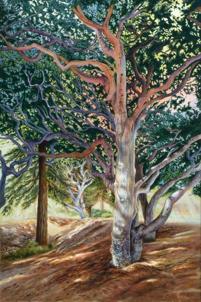 """Majestic Tree Of Greenwood Park"" Art   Bonnie Sailer Fine Art"