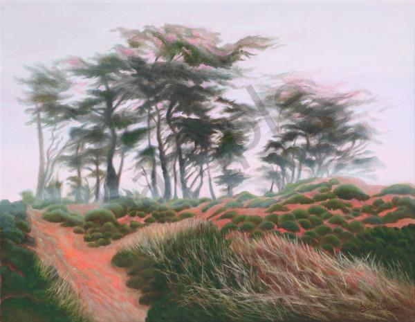 """Del Monte Forest Mist""   ""Dream Series"" Art | Bonnie Sailer Fine Art"