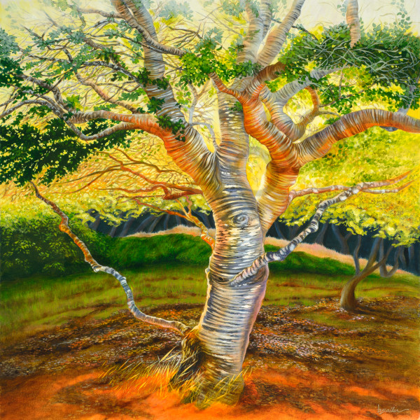 """Carmel Valley Oak"" Art | Bonnie Sailer Fine Art"