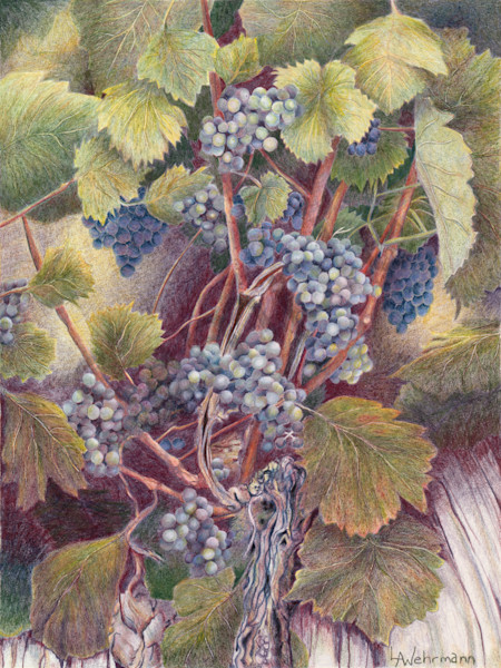 """The Vine"" by Lynn Wehrmann 
