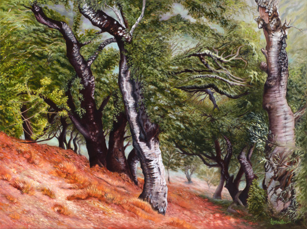 """""""Nepenthe Trees On The South Slope"""" Art 