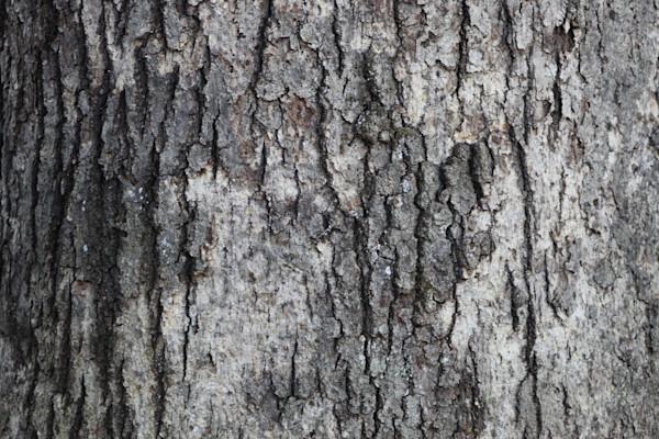 Bark not Bite