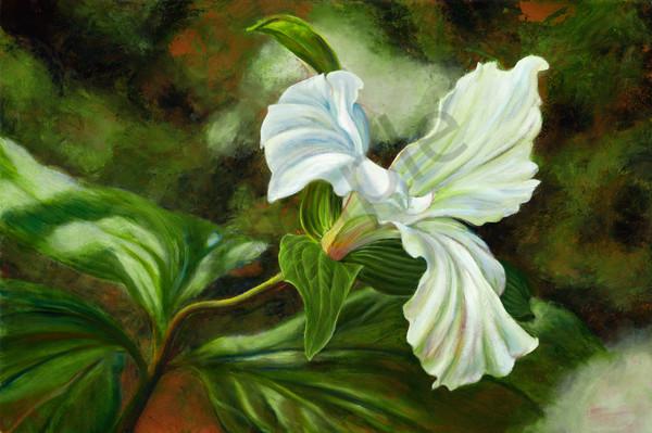 Three Petal Trillium Wildflower Oil Painting & Prints