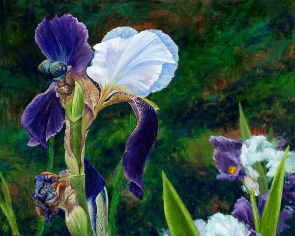 Blooming Purple Iris Painting & Prints   Roxana Sinex Art