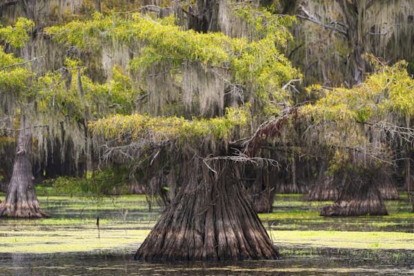 """""""Eternal"""" by Texas Photographer Harold Vincent   Prophetics Gallery"""