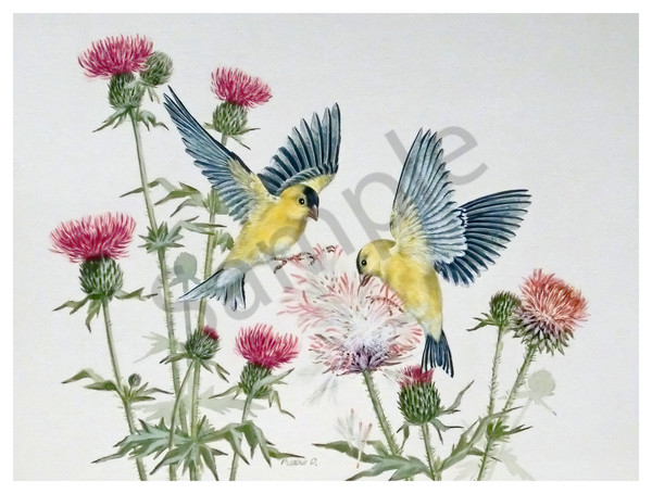 """American Gold Finches"" by Colorado Artist Jean Pierre DeBernay 