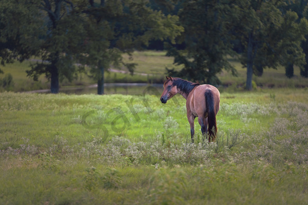 """""""Be Still I"""" by Texas Photographer Harold Vincent 
