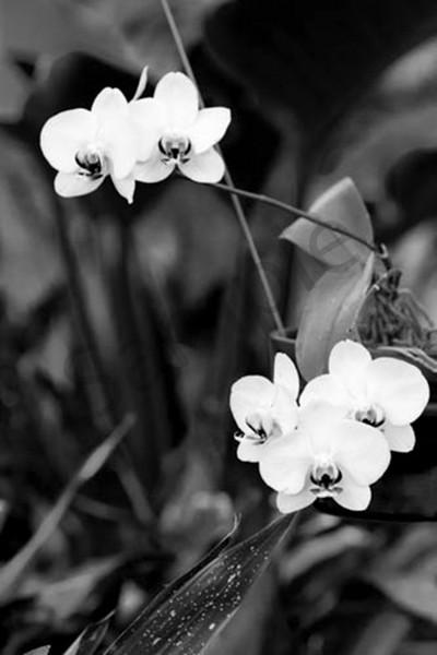 Orchid3 Photography Art | CLAUDIA LARRAIN
