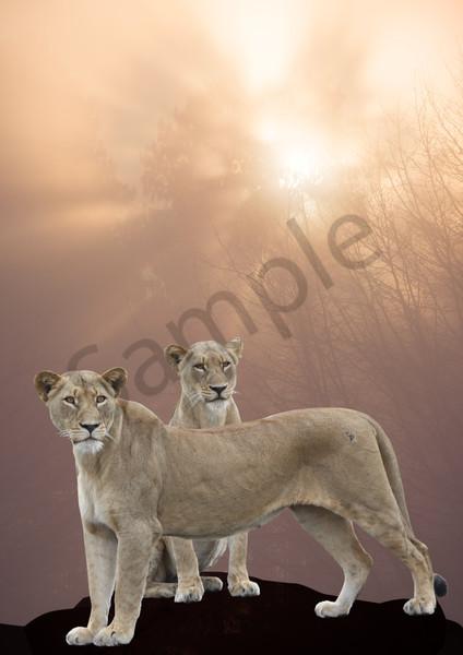 """Arise"" by South African Photographer Karen Edmondson | Prophetics Gallery"
