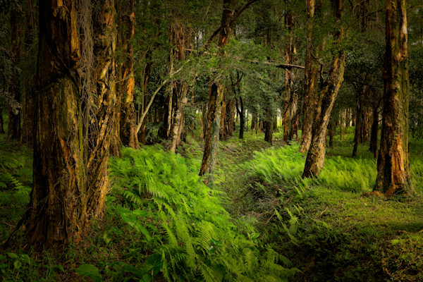 Hkgc Forest01 7 2018 Photography Art   Dave Sansom Photography LLC