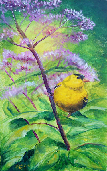 """Golden Finch"" by Indiana Prophetic Artist Gina Harding | Prophetics Gallery"