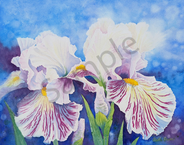 Iris in Blue fine art watercolor prints available in paper, metal, acrylic, canvas or wood by Beth Owen.