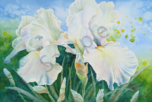 White Iris watercolors prints available in paper, metal, acrylic, canvas and wood by Beth Owen