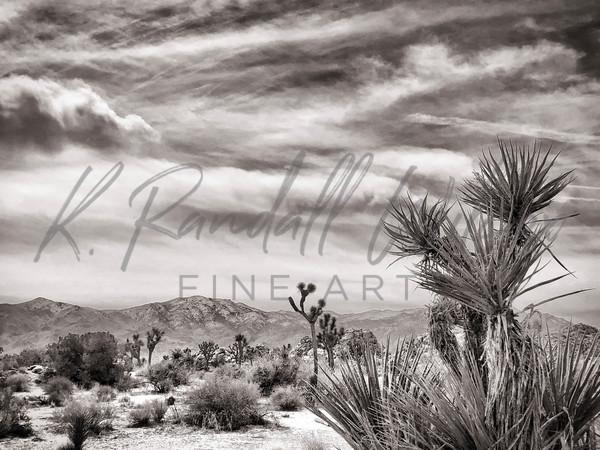 Joshua Tree   Yucca Valley Art | K. Randall Wilcox Fine Art