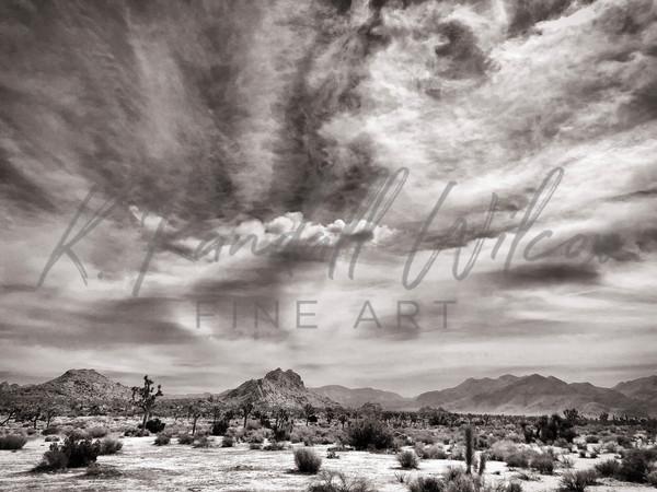 Wind Swept Art | K. Randall Wilcox Fine Art