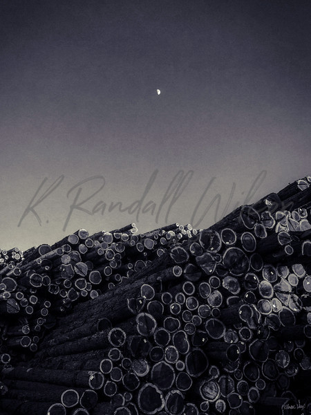 Redwood Moon Art | K. Randall Wilcox Fine Art